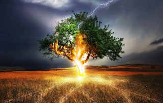 lightning hitting tree